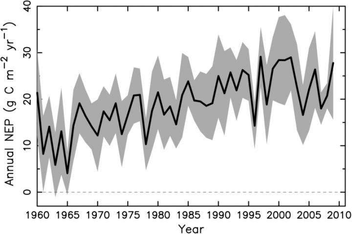 Annual net ecosystem productivity, (NEP, in grams of carbon per square meter per year) across the study region as an average across the nine climate models. Standard error range is shown in gray. Annual NEP, which closely tracks the net CO2 sink, shows an increase through the first four decades, and remains relatively stable since 2000. CREDIT UMass Amherst