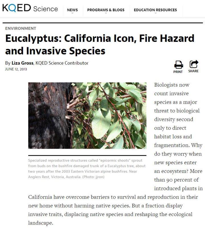 KQED-eucalyptus