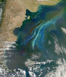 Satellites use chlorophyll's green color to detect biological activity in the oceans. The lighter-green swirls are a massive December 2010 plankton bloom following ocean currents off Patagonia, at the southern tip of South America. Credits: NASA's Earth Observatory