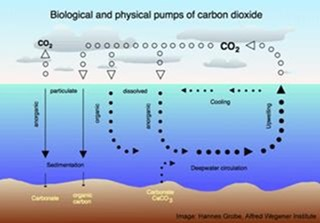 ac428256479ea Ocean Acidification: Trying to Get the Science Right | Watts Up With ...