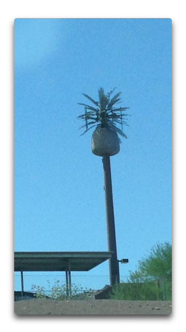 gc palm tree cell tower