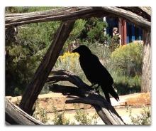 gc raven