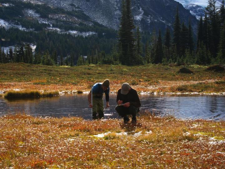 To develop the model, the team collected data for 121 wetland sites in Olympic National Park, Mount Rainier National Park and North Cascades National Park. Researchers monitored each site several times during the summer and fall of 2012. CREDIT Maureen Ryan University of Washington