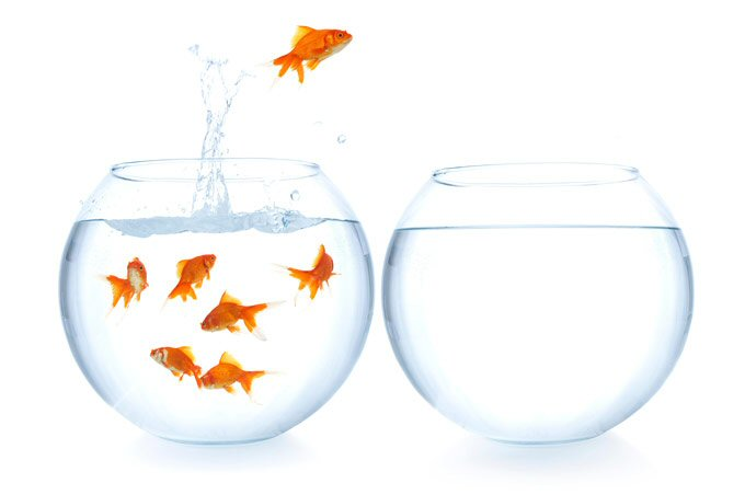 jumping-goldfish1