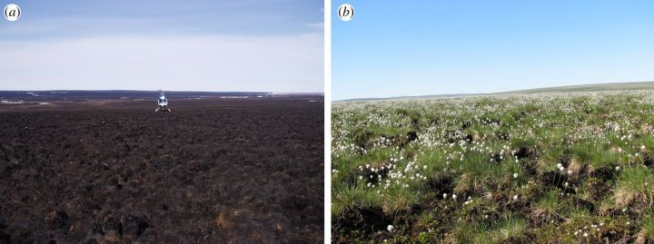 Image from The Royal Society, Philosophical Transactions B (A) shows a burned area (B) shows same area before the fire