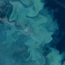 45 years of data show coccolothiphores growth is enhanced with increasing ocean acidification. CREDIT Ocean Ecology Laboratory, Ocean Biology Processing Group NASA Goddard Space Center