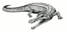 Sarcosuchus Imperator, which lived in the much warmer Cretaceous Age, author Arthur Weasley, source Wikimedia.