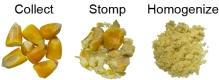 collectstomphomogenize2