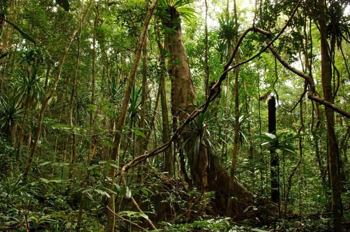 Intact forests like this one in Madagascar represent our greatest protection against floods and storms. CREDIT Julie Larsen Maher/WCS
