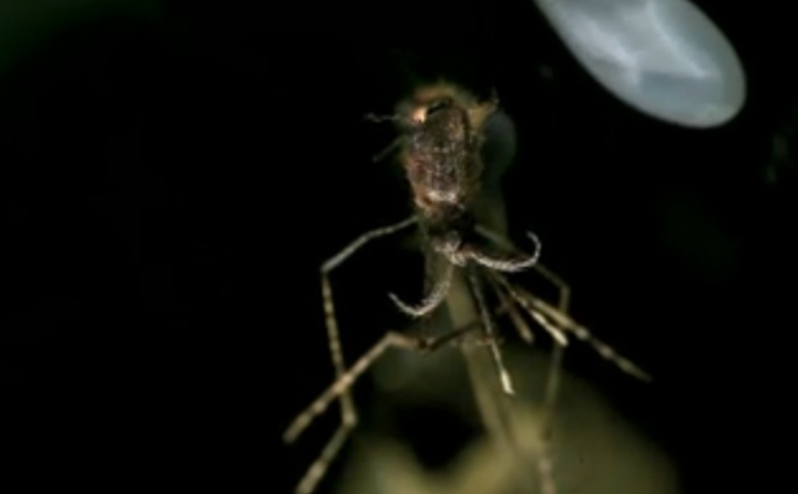 Screenshot of a burning mosquito, from a TED talk about how to shoot mosquitoes out of the air with a laser.