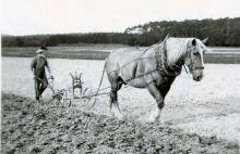 Horse-drawn-plow