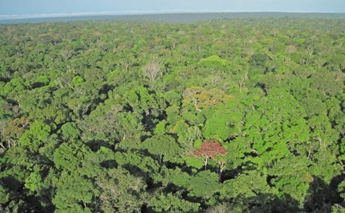 Pictures like this one, taken from special cameras installed on towers above the rainforest canopy, recorded the changes in hundreds of individual tree crowns over the seasons in three different forests across the central Amazon. CREDIT Aline Lopes, INPA (National Institute of Amazonian Research).