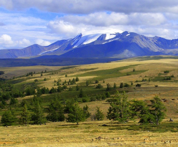 New tree-ring width measurements from the Russian Altai mountains indicate a drastic cold period 1,500 years ago. Credit: Vladimir S. Myglan