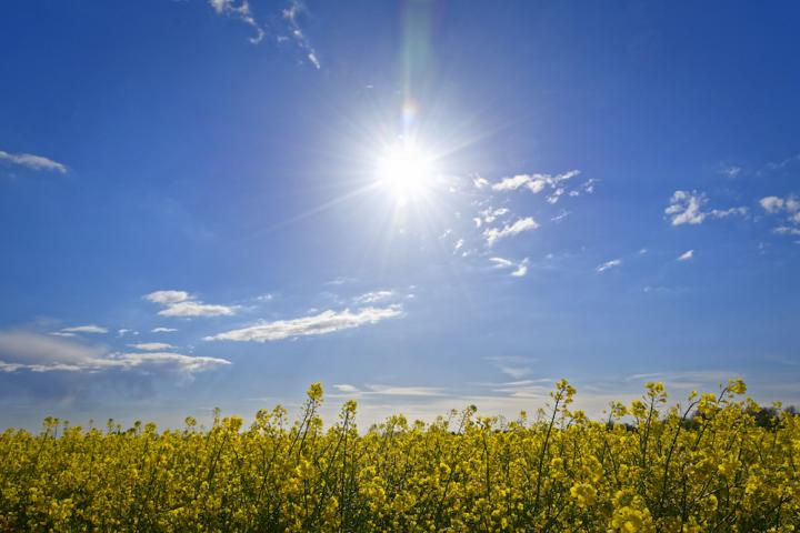 Early greening caused by global warming may amplify heatwaves across large parts of the Northern Hemisphere. CREDIT Sunny Day by Andreas Wienemann (CC2.0)