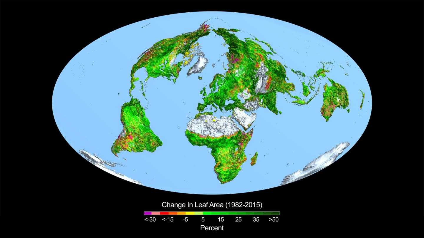 This image shows the change in leaf area across the globe from 1982-2015. CREDIT Credits: Boston University/R. Myneni