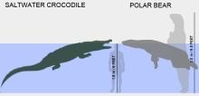 croc-vs-polar