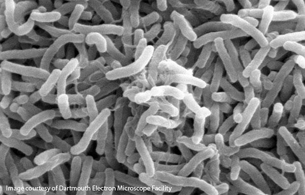 microbes_sar11