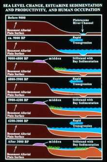 """Estuary evolution sequence on the Gulf Coast during the Holocene period.  Changes in sea level over time altered shoreline structure and Native subsistence patterns. Graphic by Robert A. Ricklis and Michael D. Blum."" http://www.texasbeyondhistory.net/coast/prehistory/images/prehistory-estuary-evolution-RR.html"
