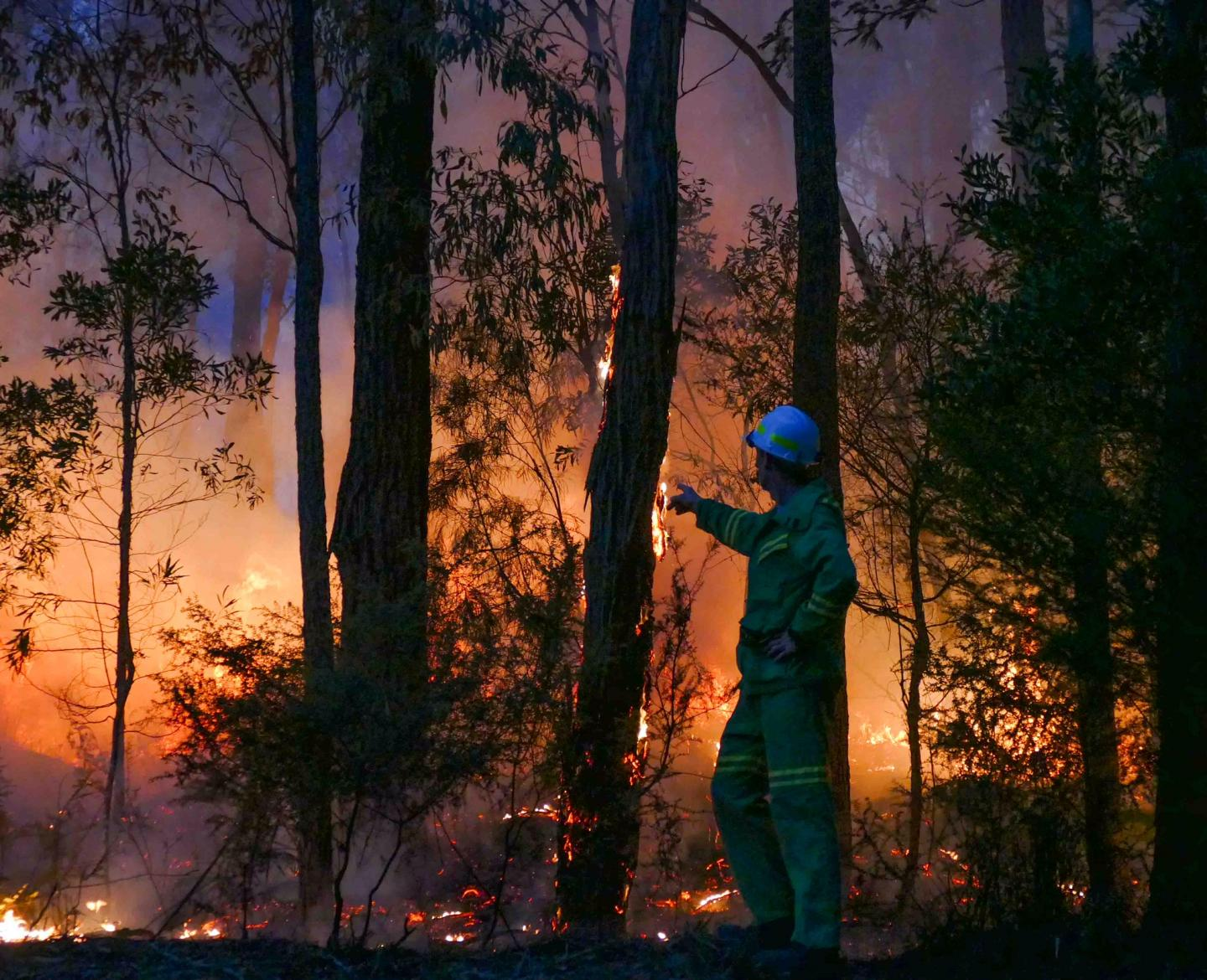 New study shows no wildfire increases due to global warming