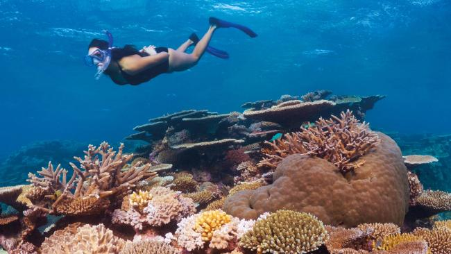 There is growing scientific conflict over bleaching on the Great Barrier Reef. Picture: Tourism Queensland