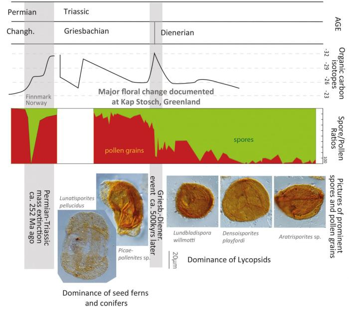 Approximately 500,000 years after the major natural disaster at the boundary between the Permian and the Triassic another event altered the vegetation fundamentally and for longer. CREDIT UZH