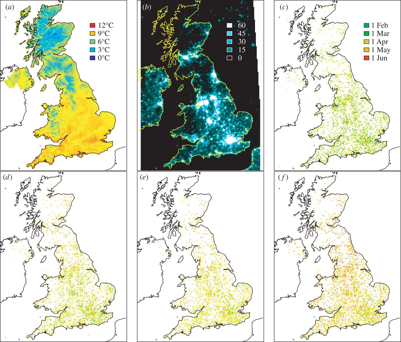 Figure 1. (a) Average spring temperatures in 2011, (b) DMSP night-time lights in 2011, (c–f) locations of budburst data for all years, for (in order of budburst) sycamore (c), beech (d), oak (e) and ash (f).