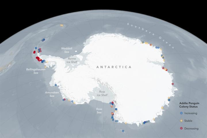 adelie-penguin-colonies-now