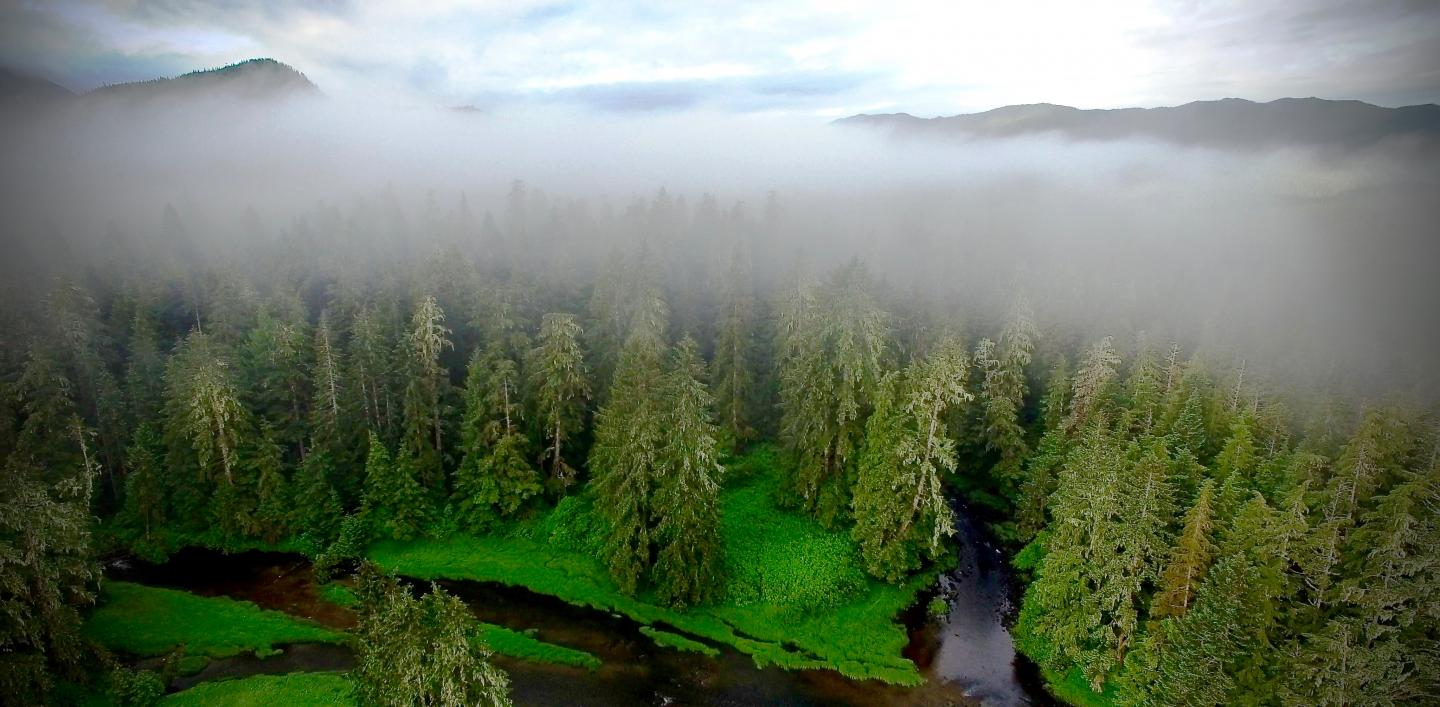 New research shows that 13,000 years of repeated human occupation by British Columbia's coastal First Nations has enhanced temperate rainforest productivity. CREDIT Will McInnes/Hakai Institute