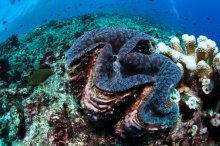 coral-castles-reef