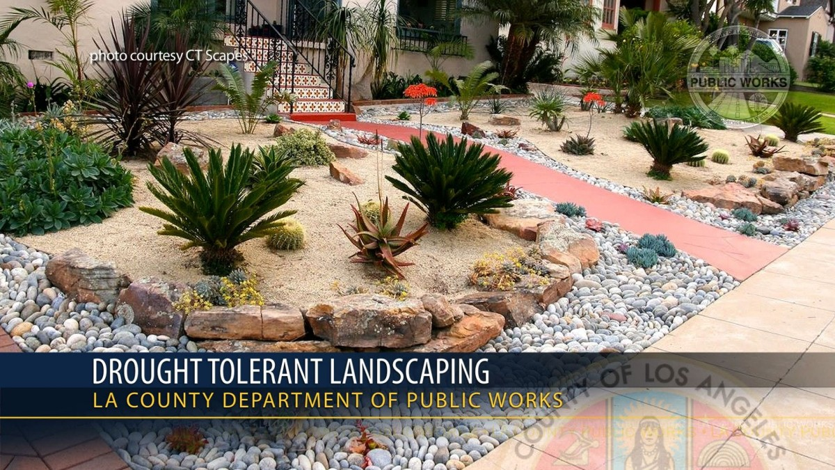 California S Drought Tolerant Landscaping May Make Heat