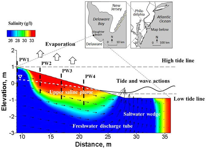 Four piezometer wells (PW1−PW4) were installed along the intertidal zone of the beach to monitor groundwater table fluctuation due to tidal action. The mean sea level was assigned as the elevation datum (0.0 m). Major processes of subsurface pore water flow and salt fate are illustrated in the Figure, including the upper saline plume, the freshwater discharge tube, the classic saltwater wedge, and pore water evaporation from the beach surface. Note the exaggerated vertical scale. The map of the studied site is obtained from Jackson et al.
