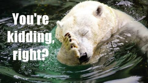 polar-bear-facepalm1