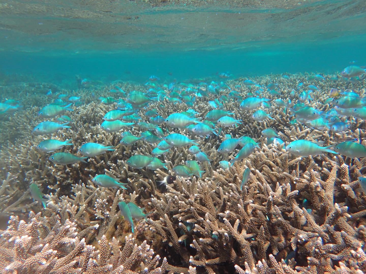 These are fish congregating on the Kitutia Reef. CREDIT Jennifer O'Leary