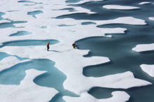 Melt pools on melting sea-ice. New research shows humans may have been altering Arctic sea ice longer than previously thought. Credit: NASA.