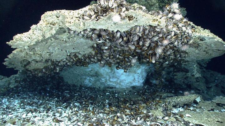 Gas hydrate (white, ice-like material) under authigenic carbonate rock that is encrusted with deep-sea chemosynthetic mussels and other organisms on the seafloor of the northern Gulf of Mexico at 966 m (~3170 ft) water depth. Although gas hydrate that forms on the seafloor is not an important component of the global gas hydrate inventory, deposits such as these demonstrate that methane and other gases cross the seafloor and enter the ocean. CREDIT Photograph was taken by the Deep Discoverer remotely operated vehicle in April 2014 and is courtesy of the National Oceanic and Atmospheric Administration's Ocean Exploration and Research Program.