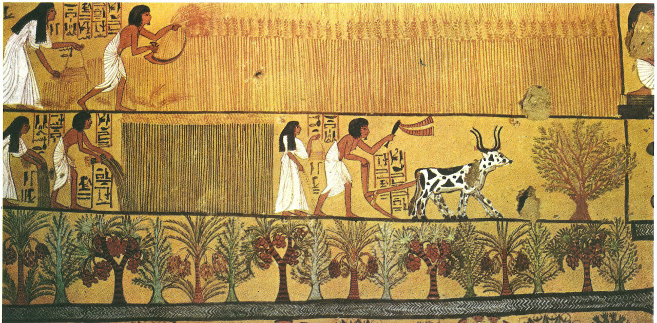 Agriculture In Ancient Egypt Their Main Crops Were Wheat Barley And Emmer Source Wall Mural