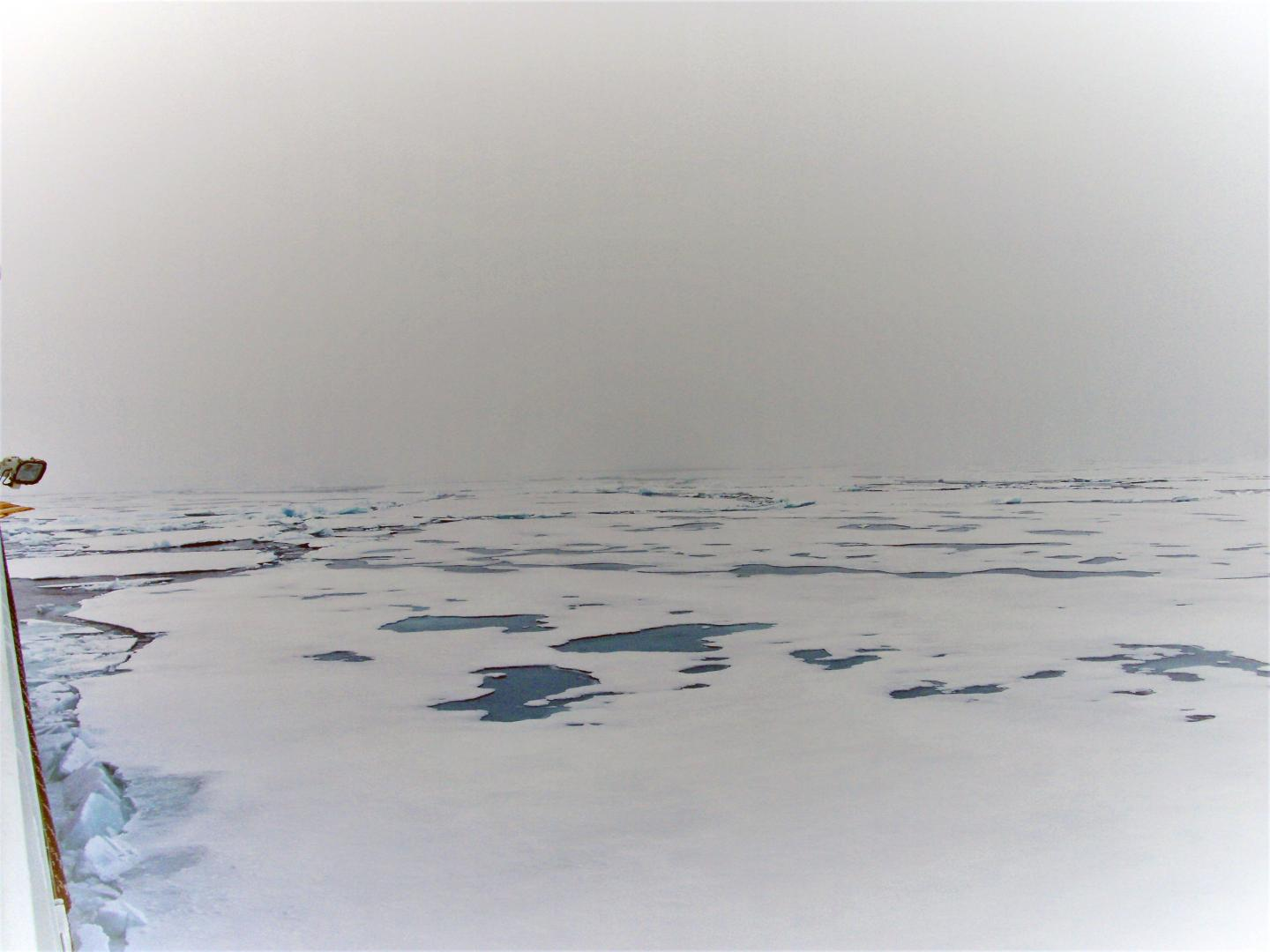 Inconvenient finding: Melting sea ice may lead to more life in the sea
