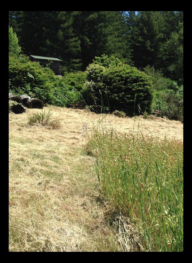 cut grass albedo