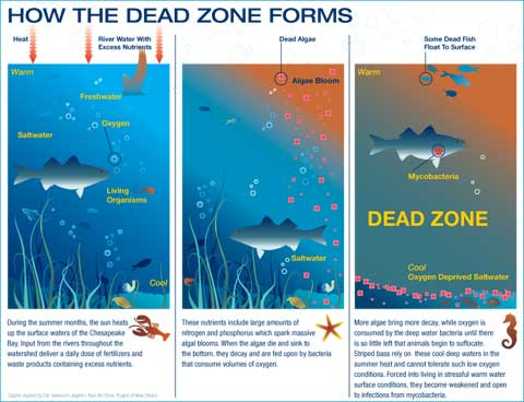 DeadZone_Infographic