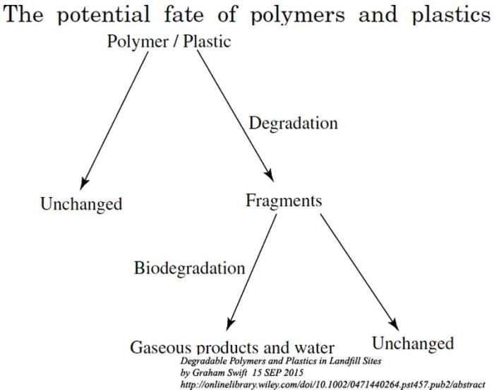fate-of-polymers