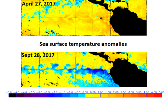 Sea surface temperatures have dropped in the tropical Pacific Ocean during the last five months; data courtesy NOAA