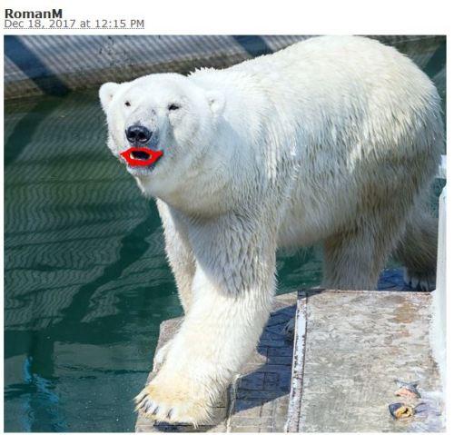 putting lipstick on lewandowsky u2019s pig  er  polar bear