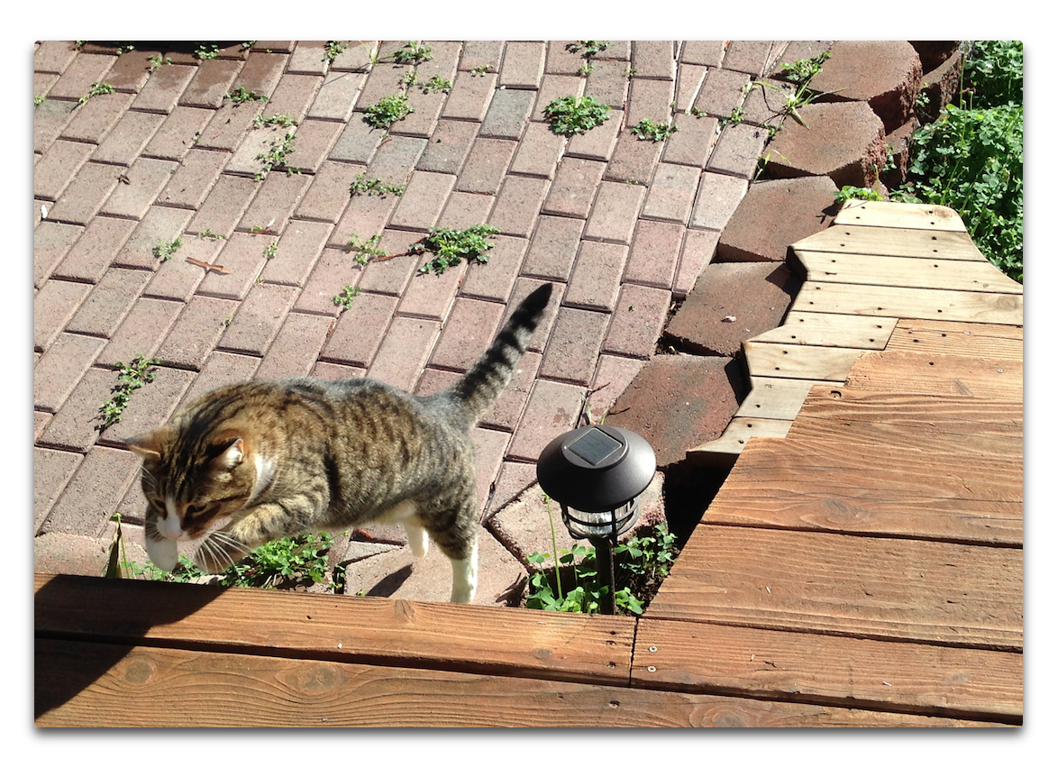 cat on the patio.png