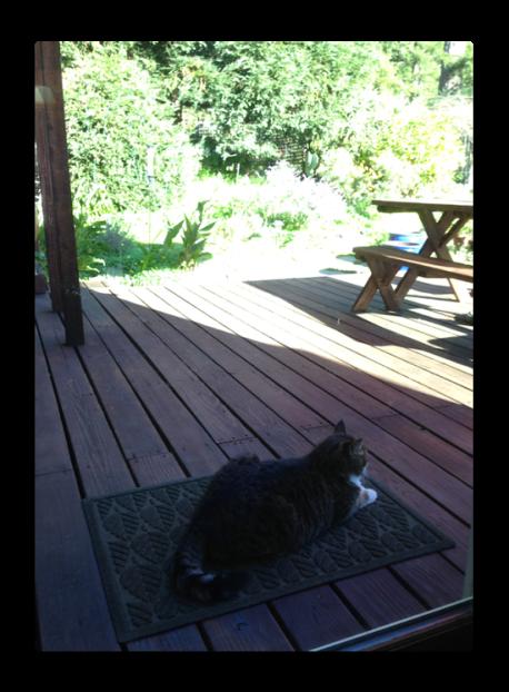 cat in the sun.png