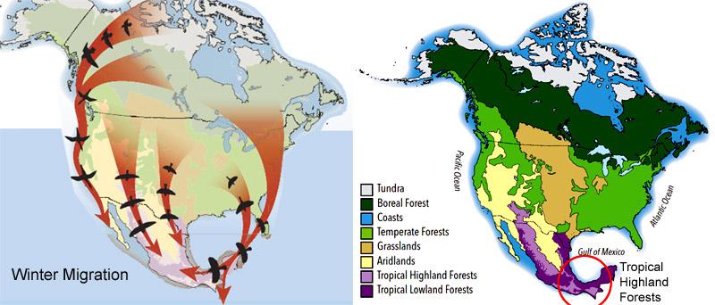 Migration_Highland_Forests