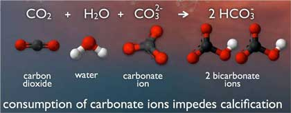 carbonate_chemistry