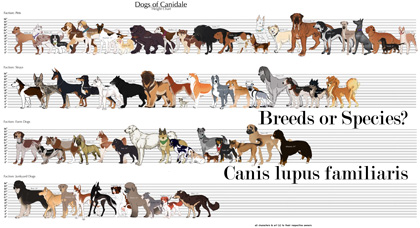 dogs_breeeds_or_species_420