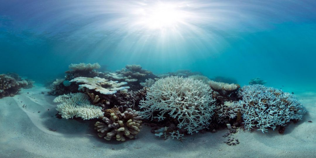 interesting finding coral bleaching less where ocean temp